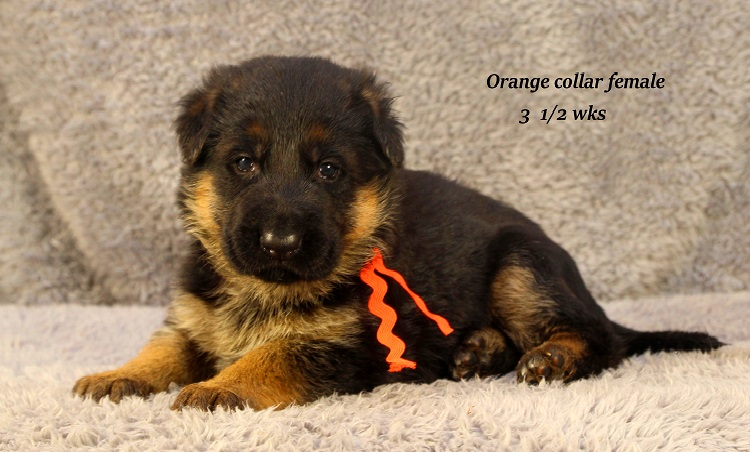 marta-35-orange2