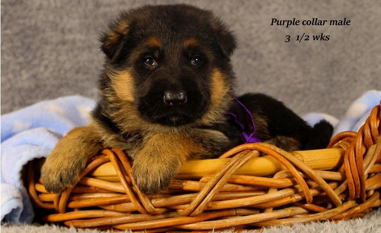 marta-35-purple