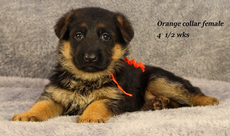 marta-45-orange