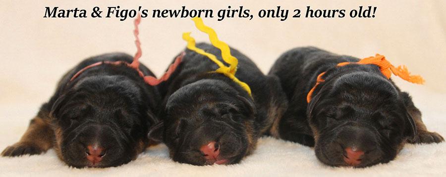 Marta-Newborns