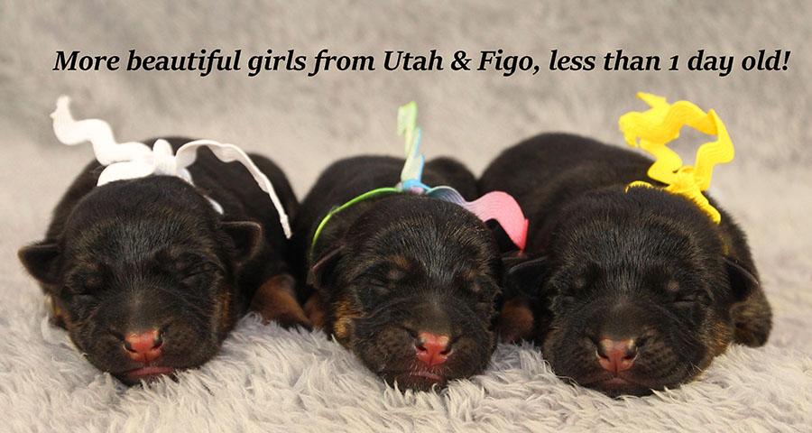 Utah-Jack-Newborns-2