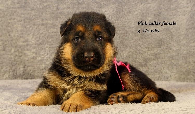 vespa-35-pink