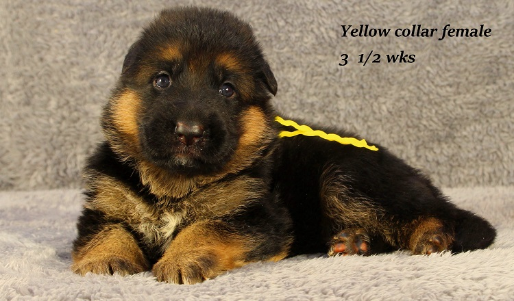 vespa-35-yellow