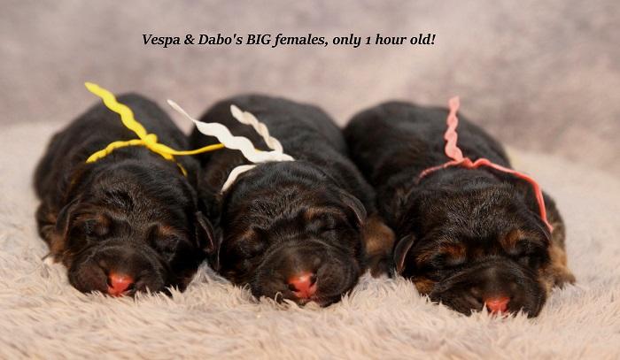 vespa-newborn-females