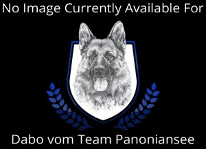 Dabo vom Team Panoniansee No Dog Placeholder