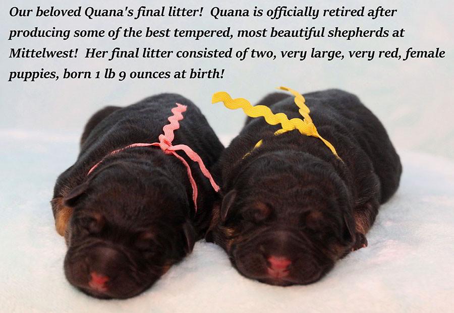 Quana-Newborn-Girls