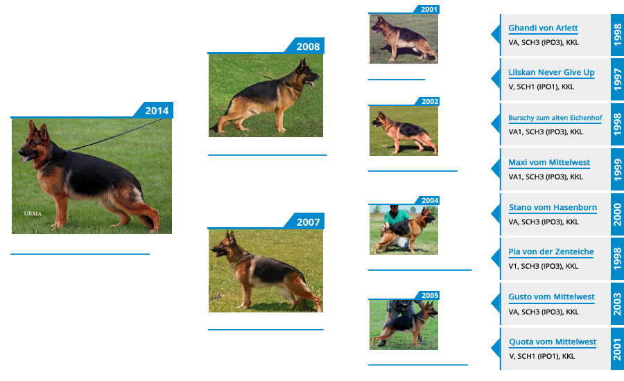 Breeding Females - V Chi Chi vom Mittelwest - Pedigree