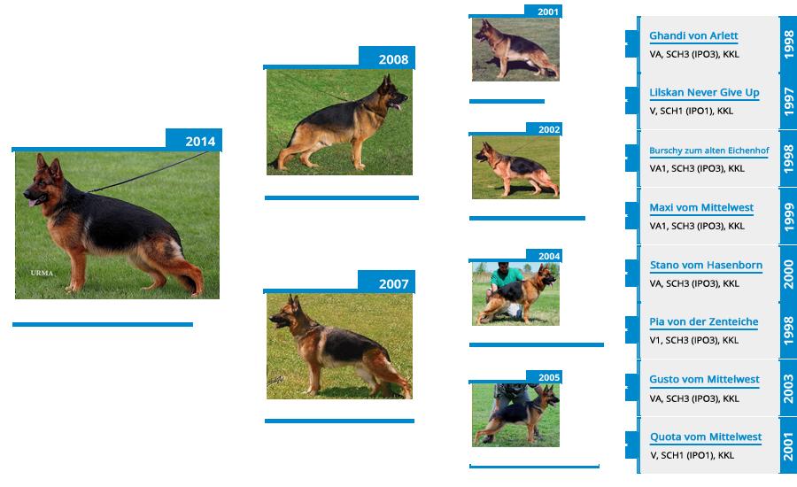Breeding Females - V Chi Chi vom Mittelwest - Pedigree