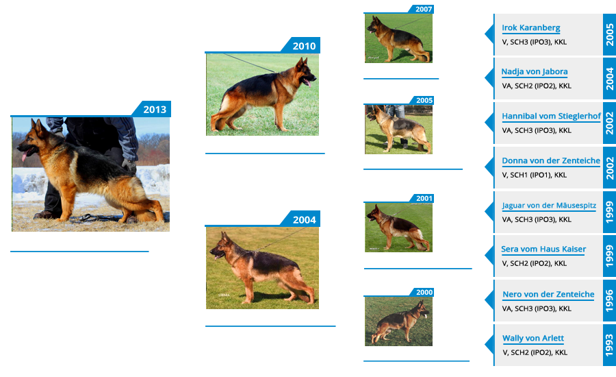Breeding Females - V Gotcha vom Mittelwest - Pedigree