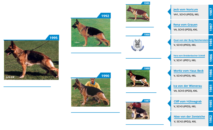 Pedigree For - VA2 Hanah vom Mittelwest - Pedigree