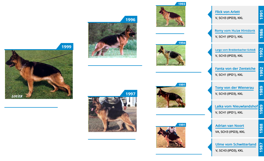 Pedigree For - VA1 Maxi vom Mittelwest - Pedigree