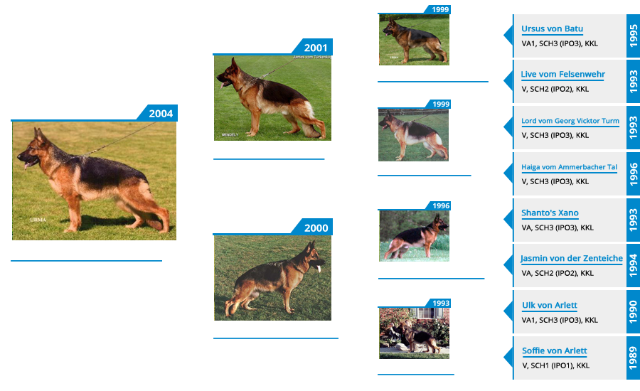 Pedigree For - VA (2X) Natasha vom Mittelwest - Pedigree