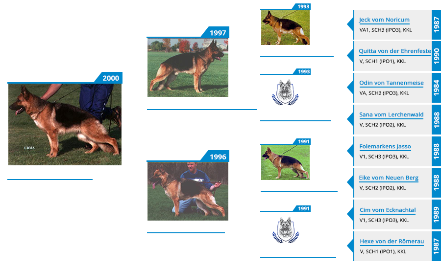 Pedigree For - VA Olly vom Mittelwest - Pedigree