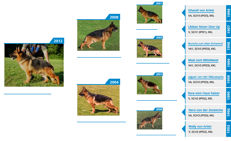 Breeding Females - V Orrie vom Mittelwest - Pedigree
