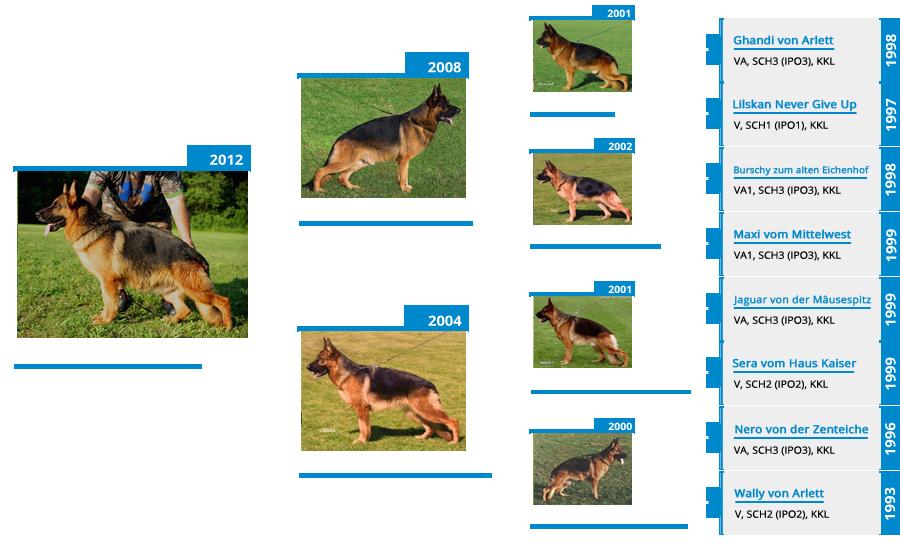 Breeding Females - V Orrie vom Mittelwest - Pedigree