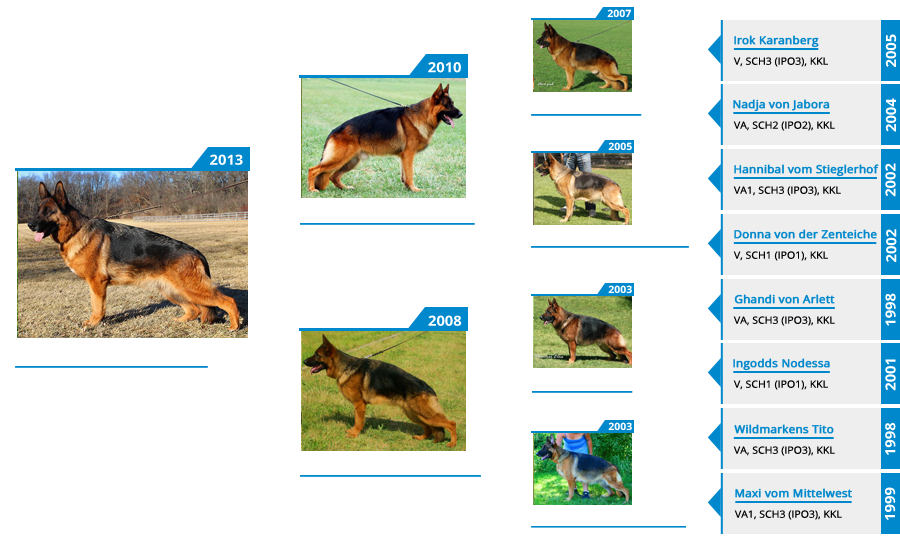 Breeding Females - V Vespa vom Mittelwest - Pedigree