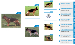 Pedigree For - VA2 Winnie vom Mittelwest - Pedigree