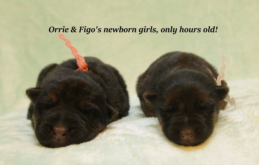 orrie-figo-newborns