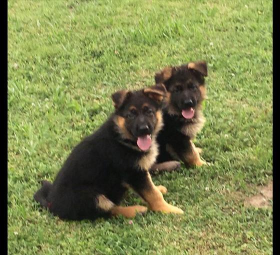 marlo-pups12xxxx