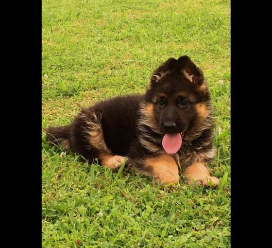 marlo-pups4xx