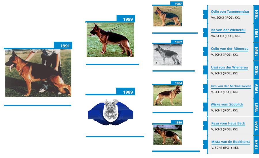 Stud Dog - VA Kimbo von Bisschofsheim - Pedigree