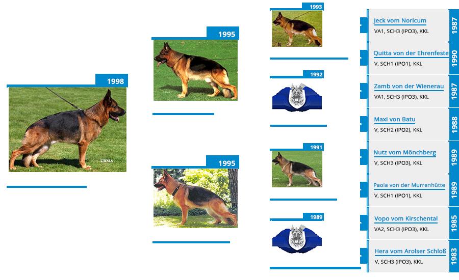 Stud Dog - VA Wildmarkens Tito - Pedigree