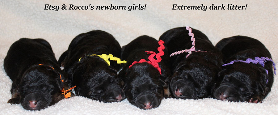 Etsy & Rocco - Newborn Girls