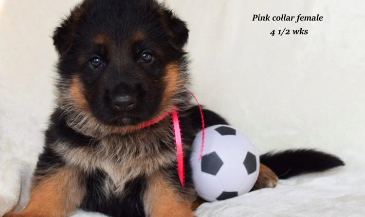 Rayna-4-Pink-1