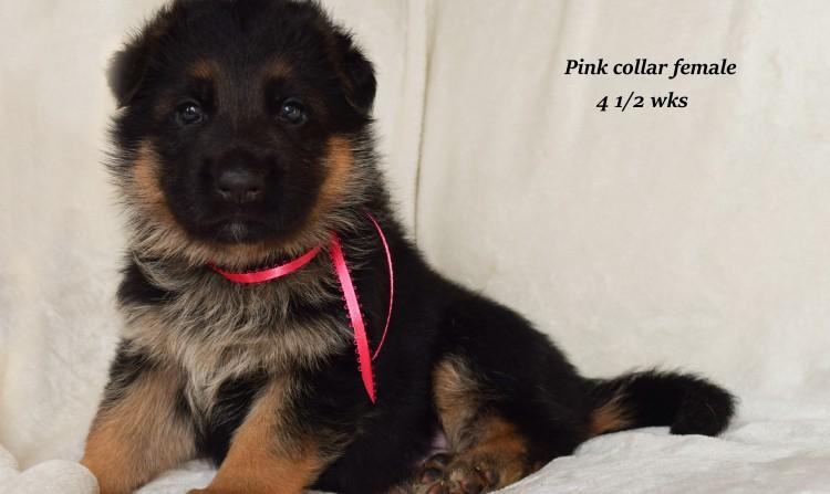 Rayna-4-Pink-2