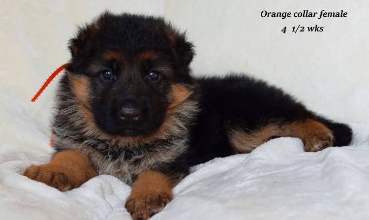 rayna-4-orange