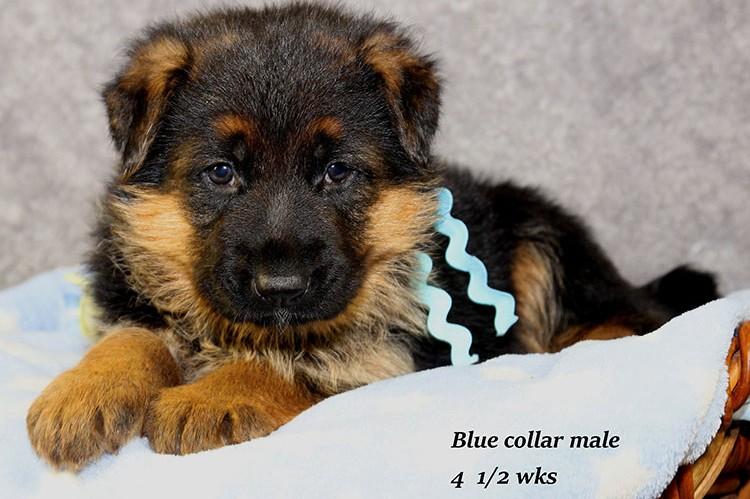 Figo x Philly - Blue Collar Male