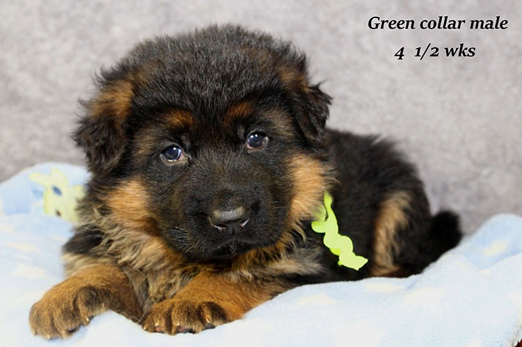 Figo x Philly - Green Collar Male