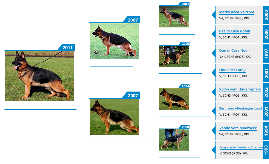 Breeding Females - Hurricane von der Lars-Aue - Pedigree