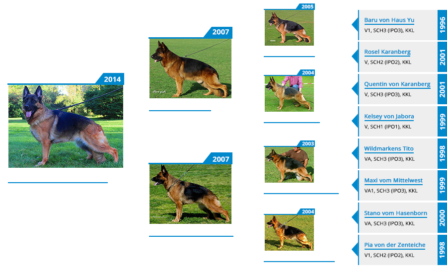 Breeding Females - Twitter vom Mittelwest - Pedigree