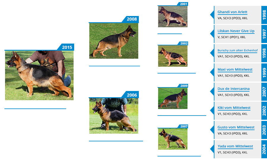 Breeding Females - Napa vom Mittelwest III - Pedigree