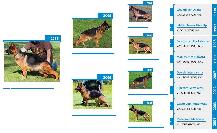 Breeding Females - Napa vom Mittelwest III - Pedigree