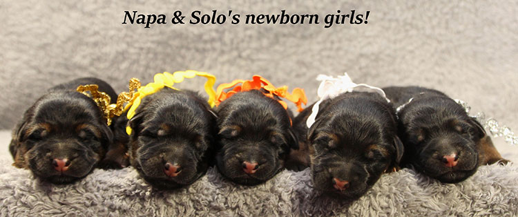 Solo x Napa - Newborn Females