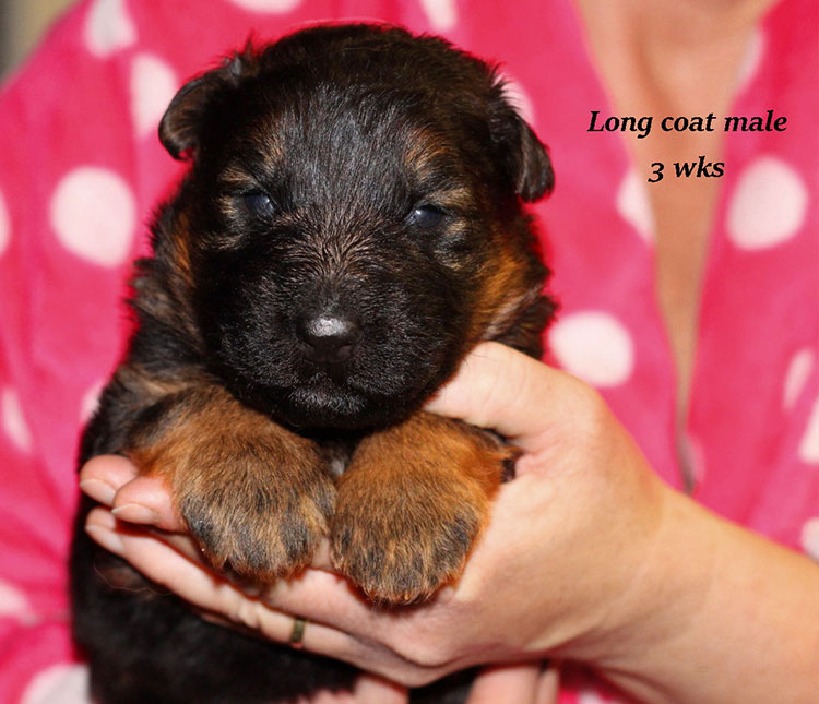 Rocco x Shelby - 3 Weeks Long Coat Male 2