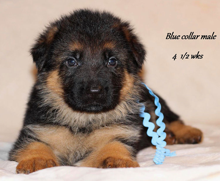 Obi x Yoshi - 4 and Half Week Blue Collar Male