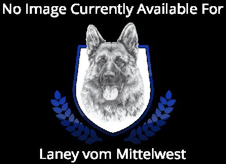 Laney vom Mittelwest