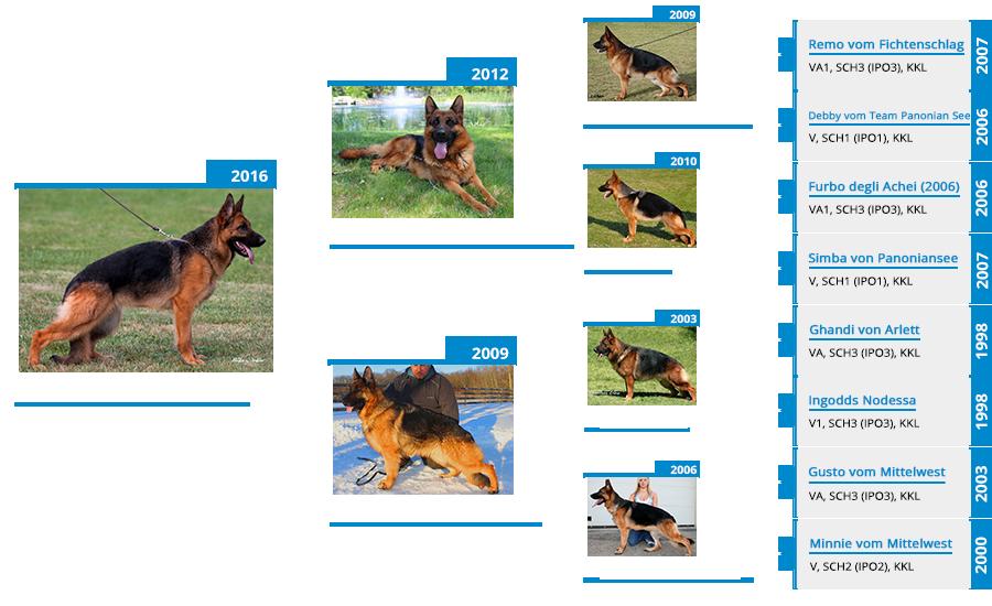 breeding-females-kimba-vom-mittelwest-II-pedigree