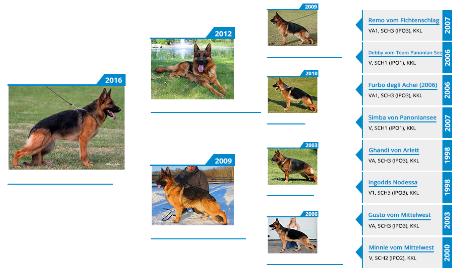 breeding-females-kimba-vom-mittelwest-II-pedigree