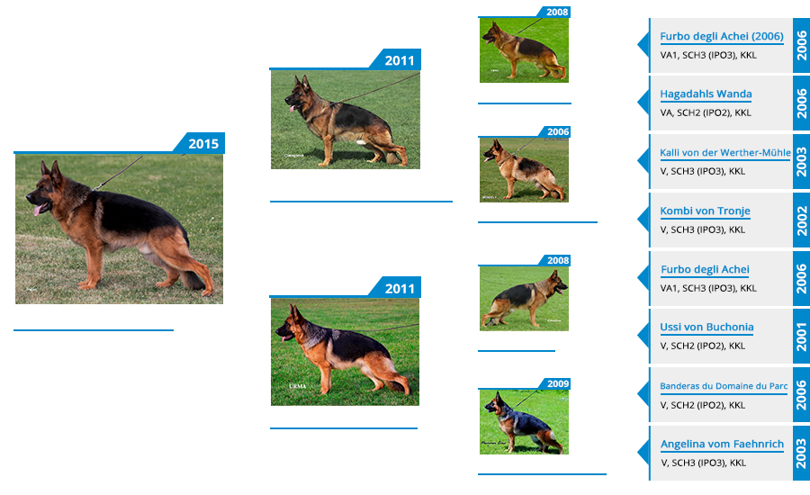 breeding-male-ikon-vom-mittelwest-pedigree