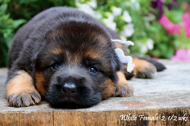 Nashville x Solo - 2 and Half Weeks White Collar Female