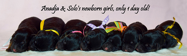 Solo x Anadja - Newborn Girls