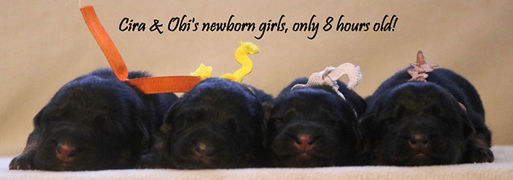 Obi x Cira - Newborn Girls