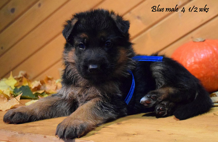 Solo x Anadja - 4 and Half Week Blue Collar Male