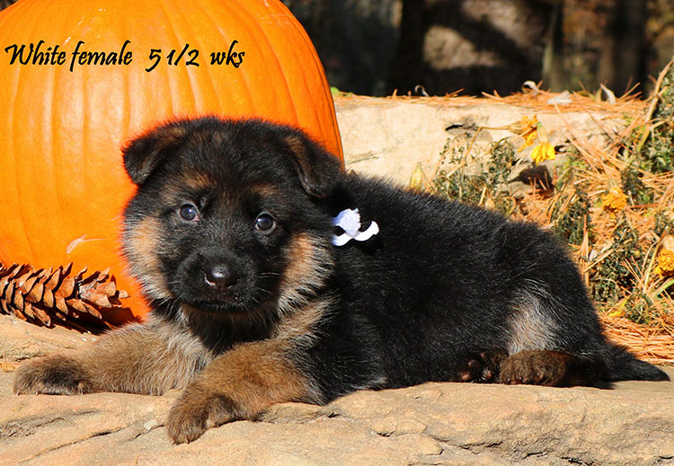 Solo x Coby - 5 and Half Week White Collar Female