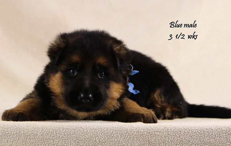 Solo x Vanna - 3 and Half Blue Collar Male