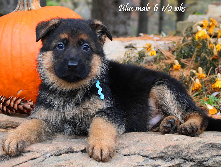 Solo x Vanna - 6 and Half Week Blue Collar Male